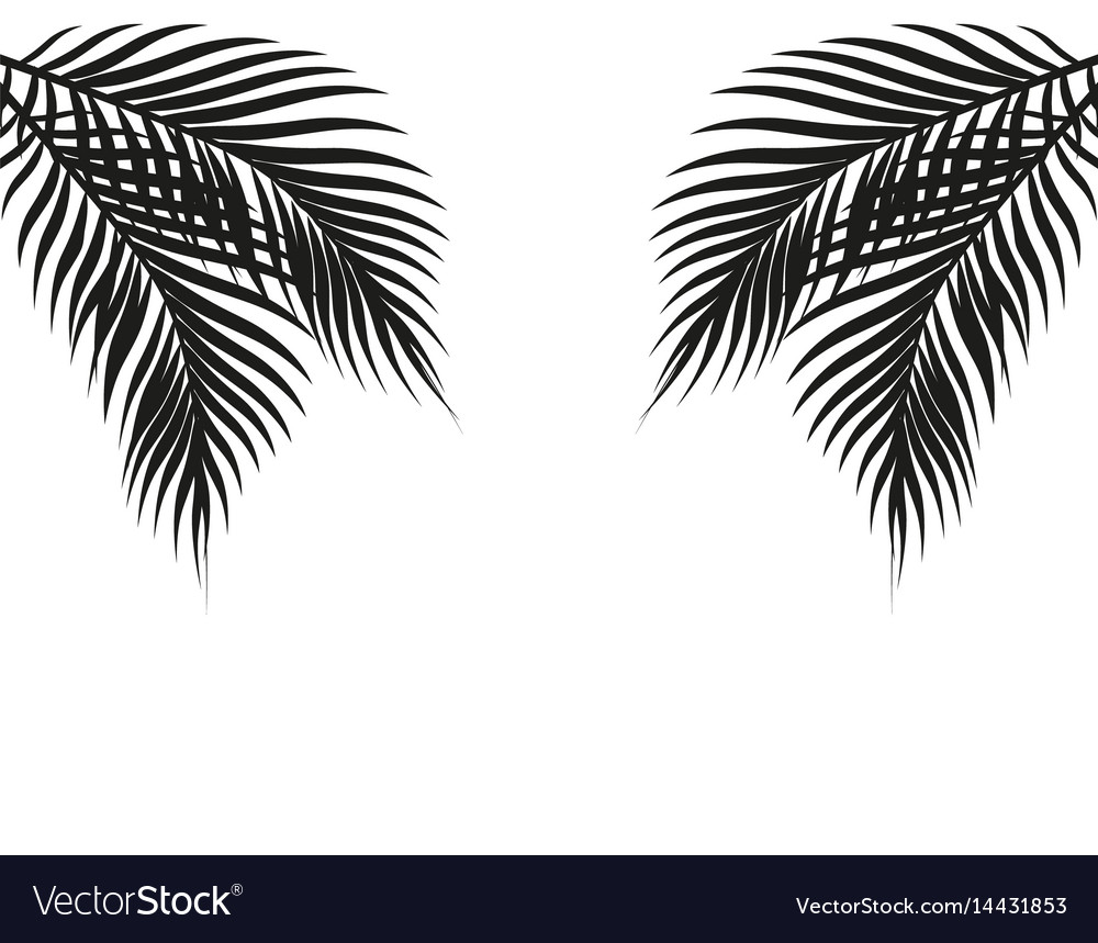 Tropical black and white palm leaves on both sides vector image