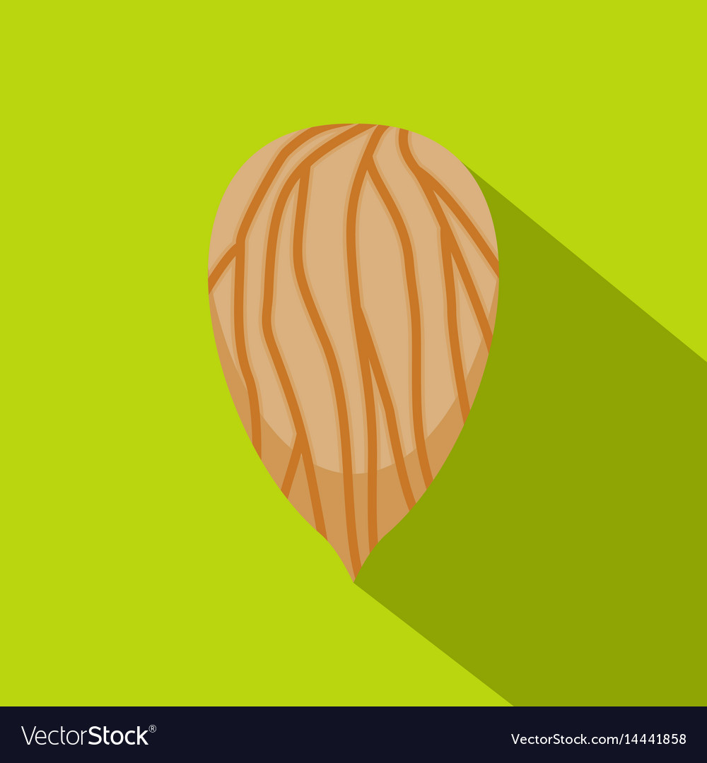 Apricot seed icon flat style