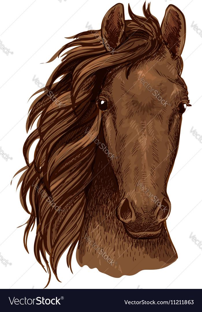 Arabian brown stallion portrait