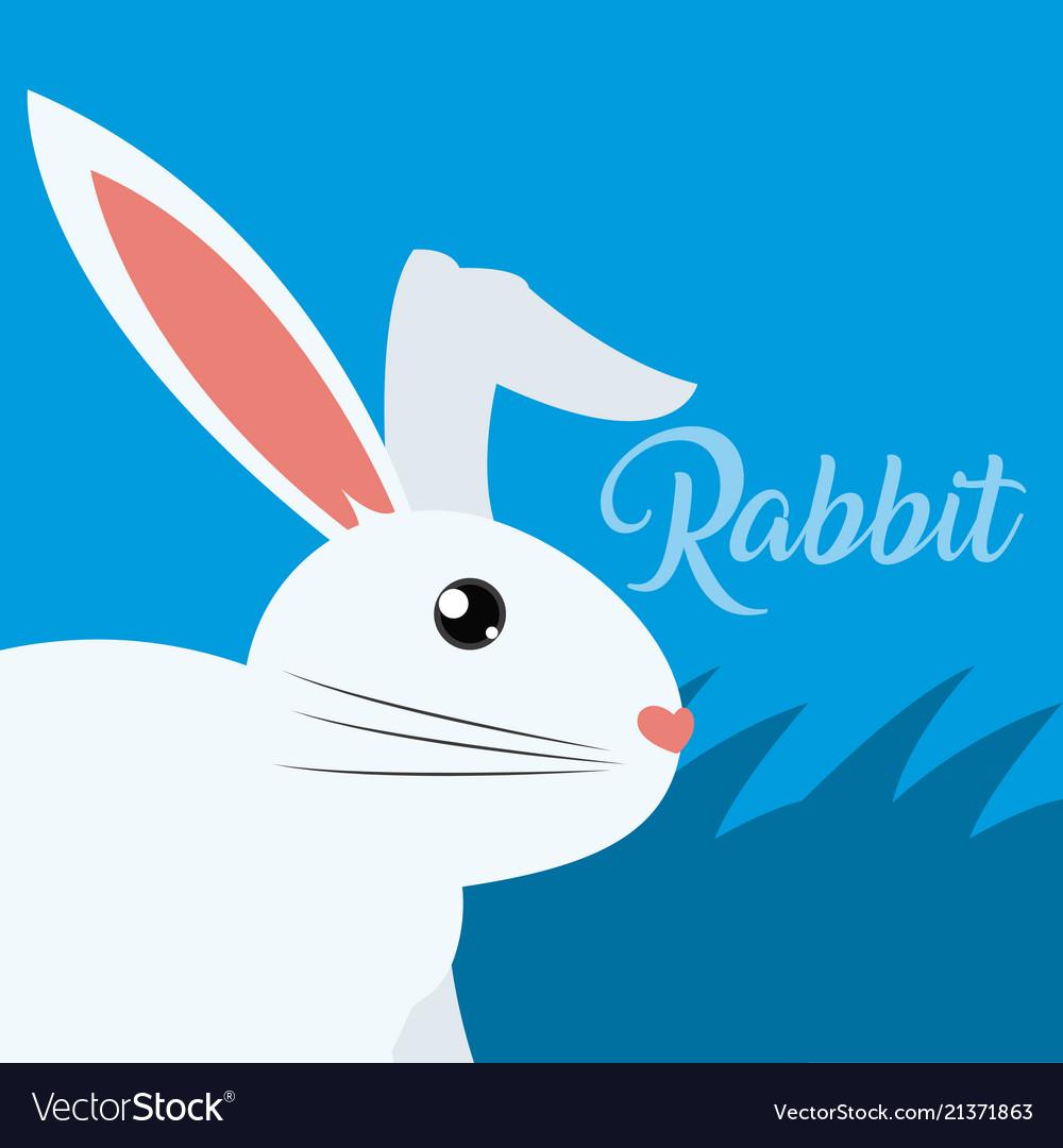 Rabbit cute animal cartoon