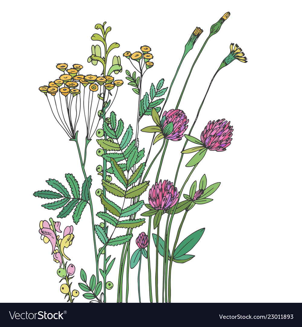 Sketch of the wildflowers on a white background