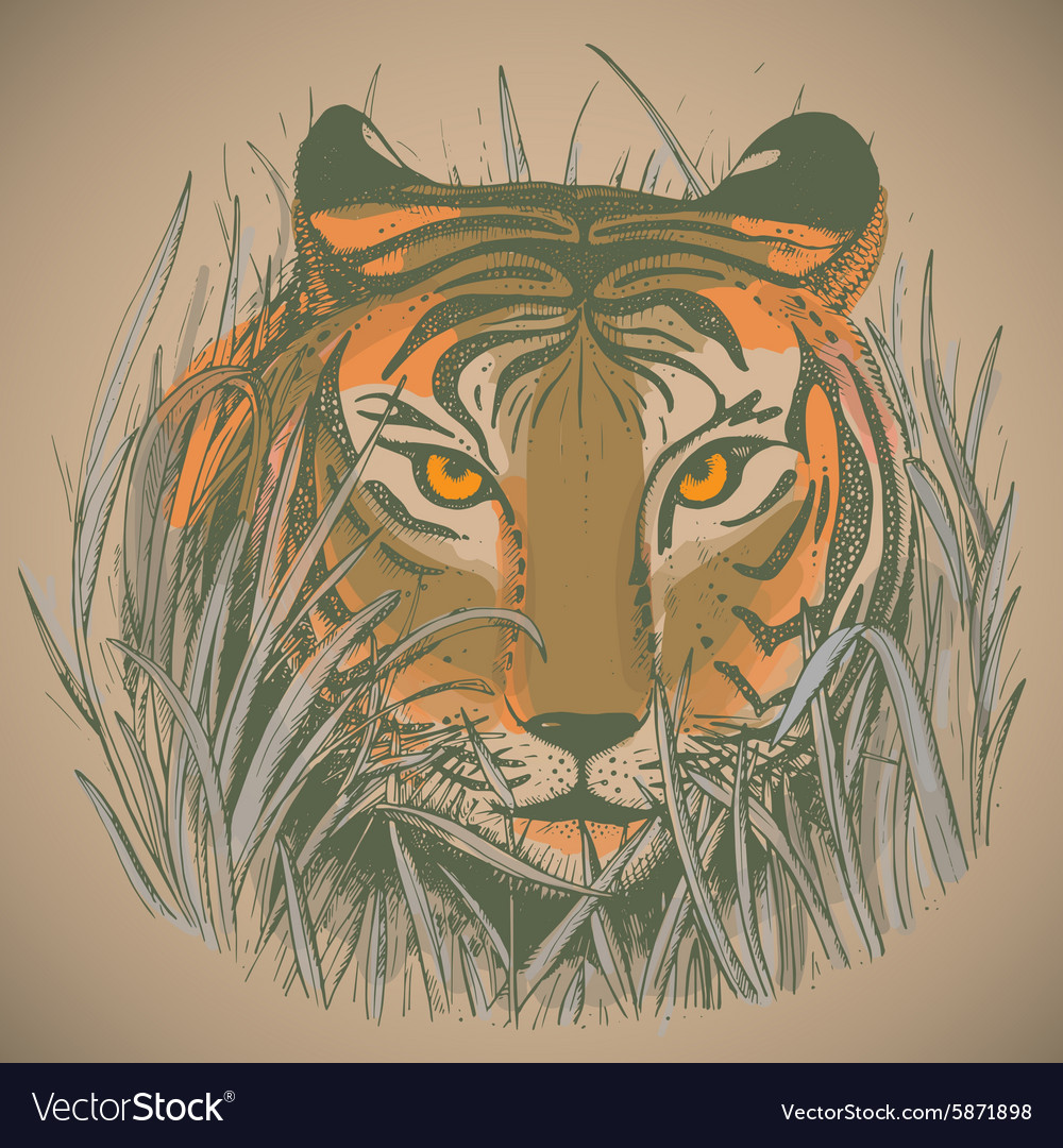 a tigers face in jungle grass royalty free vector image