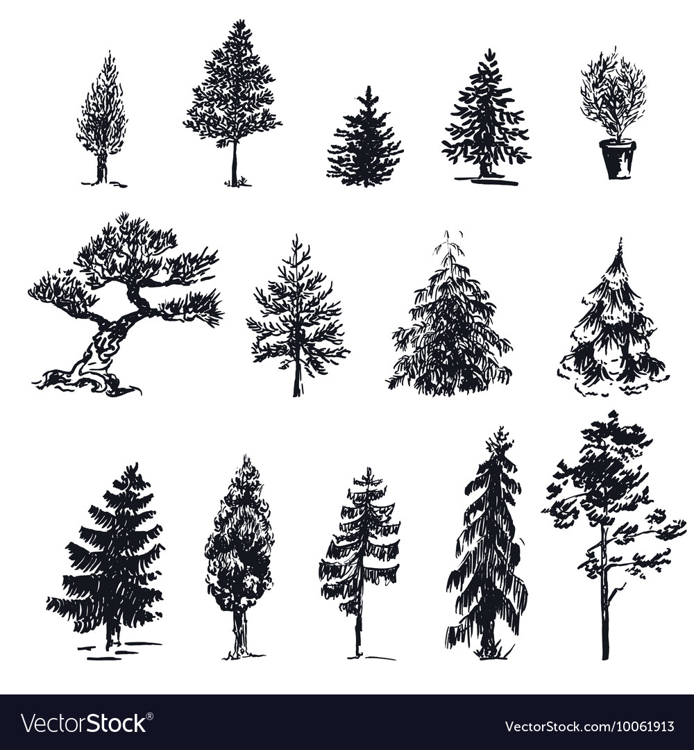Sketch trees 1