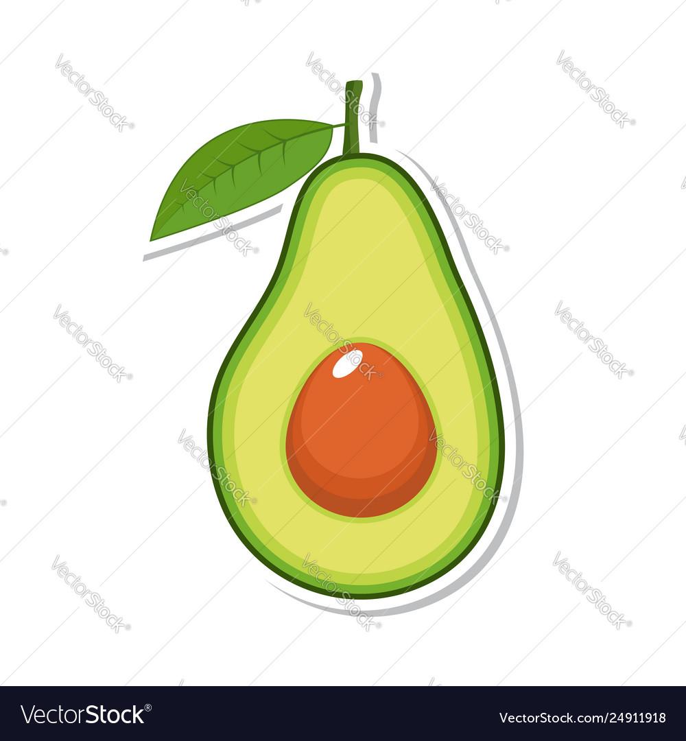 Avocado fruit isolated fruit on white background