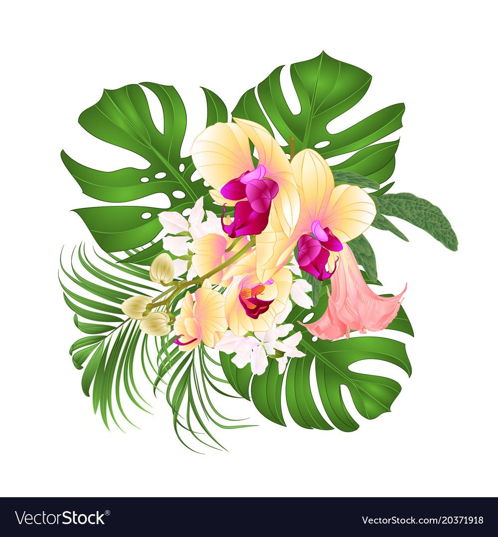 Bouquet with tropical flowers floral arrangement vector image izmirmasajfo
