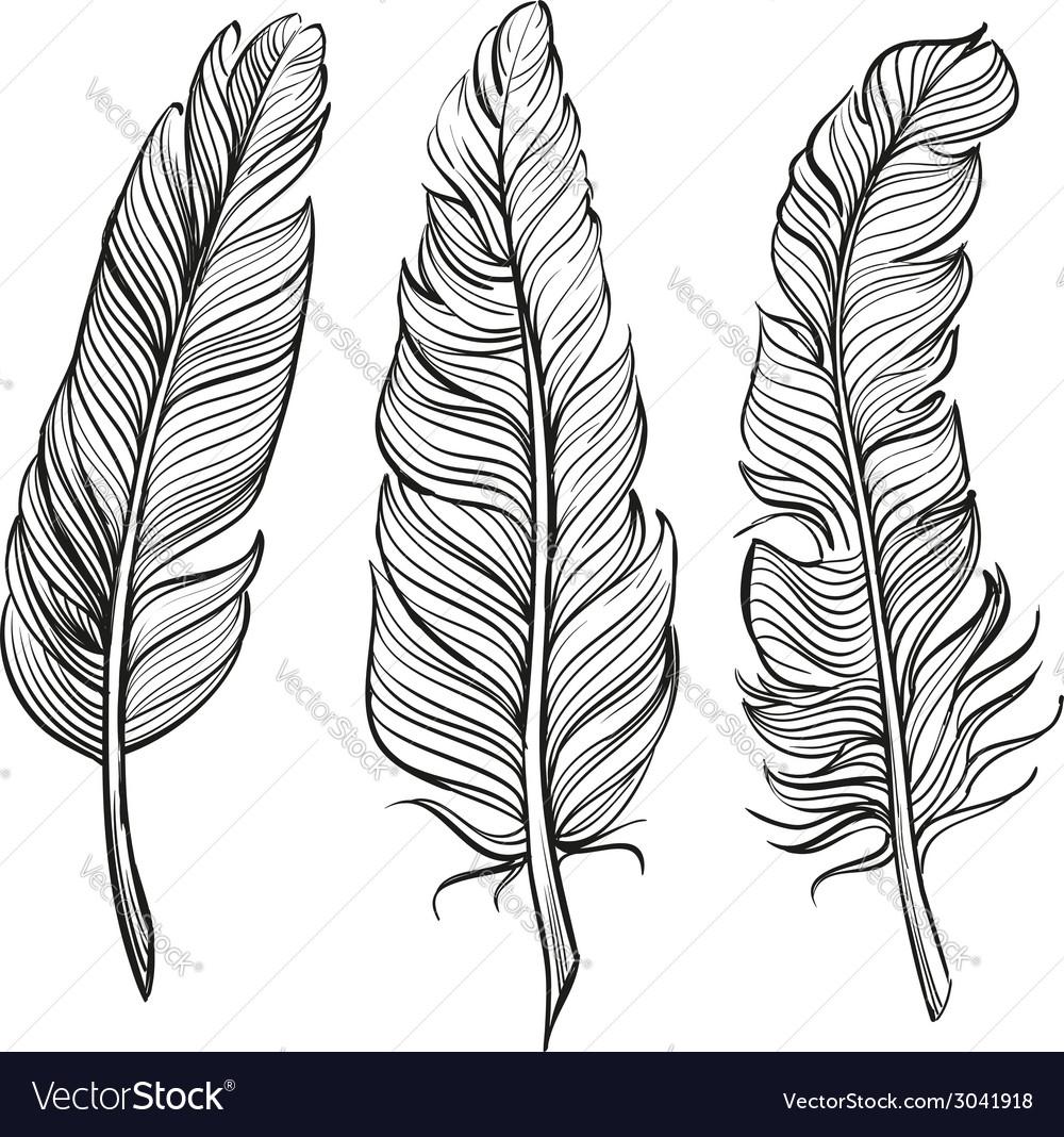 Feathers set hand drawn llustration