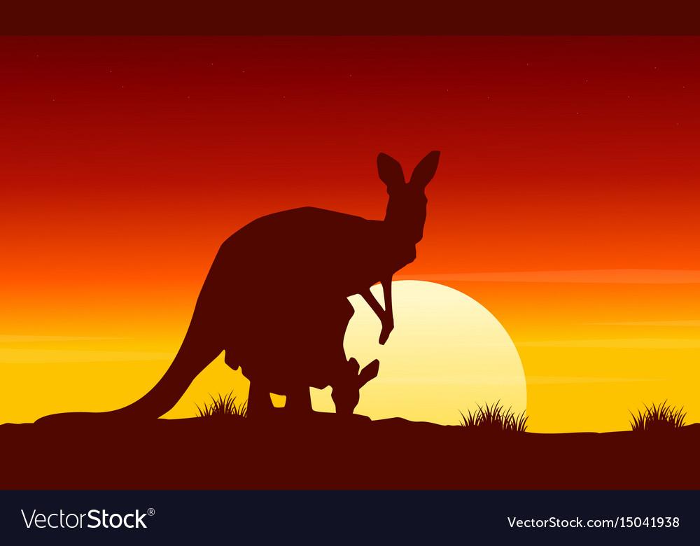At sunrise kangaroo scenery beauty landscape