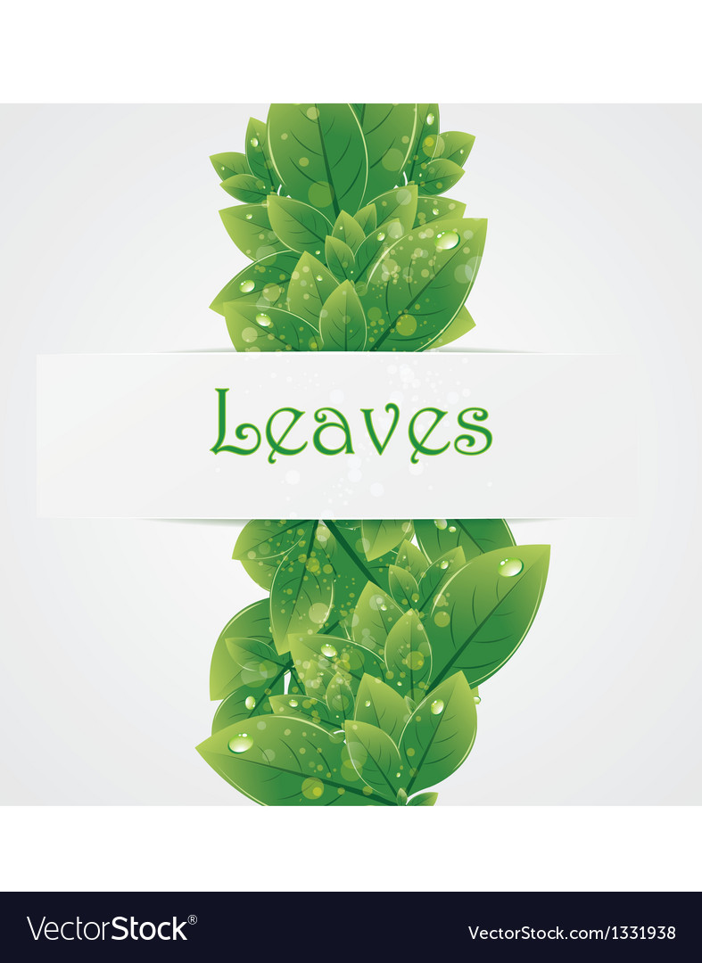 Green nature leaves background
