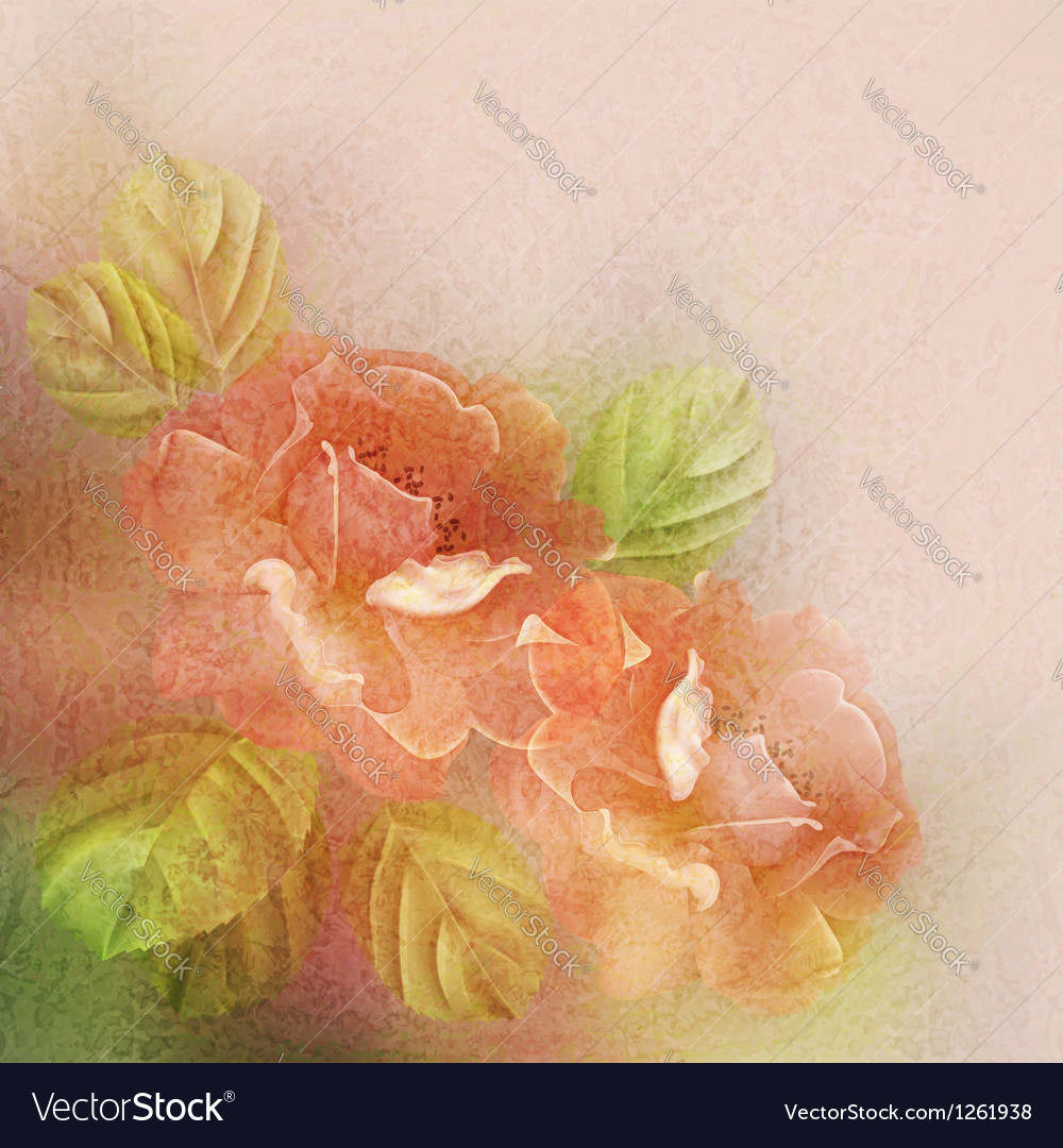 Textured romantic background with roses and leaves vector image