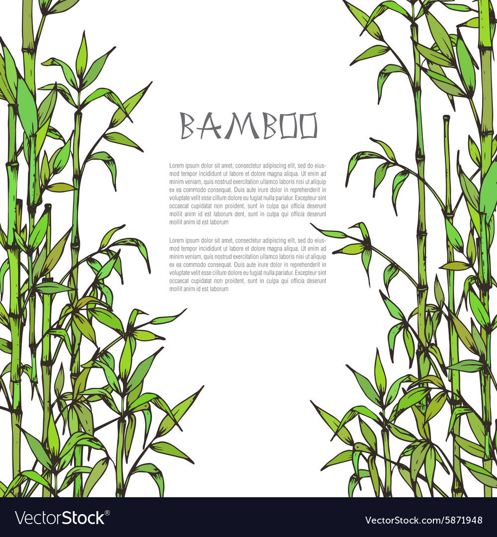 Framewith hand drawn bamboo branches on white