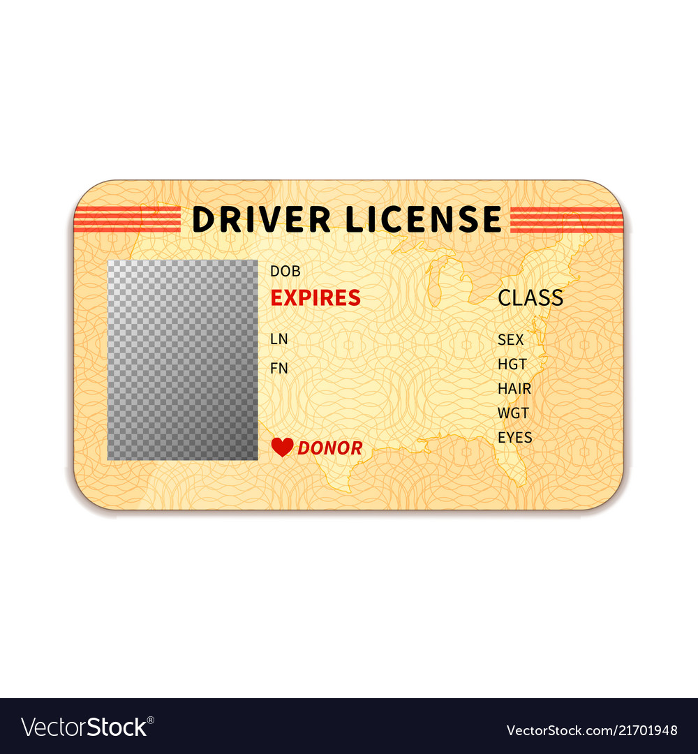 Realistic driver license with place for photo