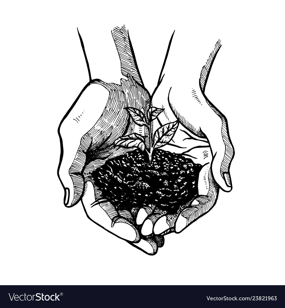Hand drawn open palms with sprout black and white vector image