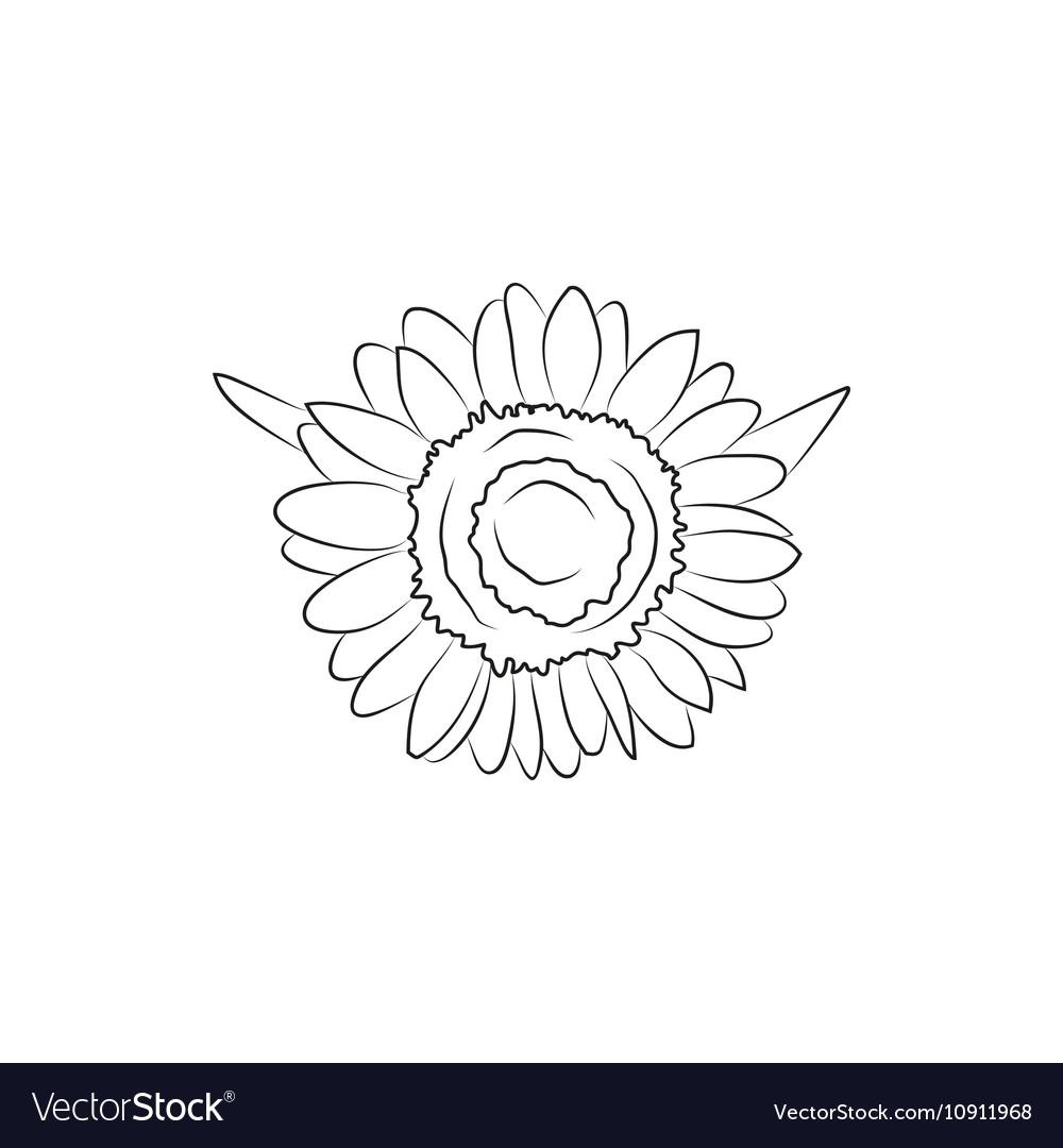 Beautiful sunflower flower simple black lined icon beautiful sunflower flower simple black lined icon vector image mightylinksfo