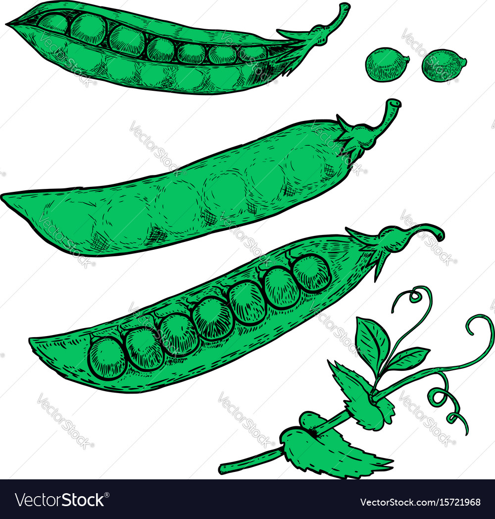 Set of hand drawn peas isolated on white