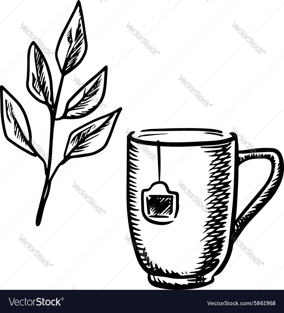 Sketch Mug With Tea Leaves Royalty Free Vector Image