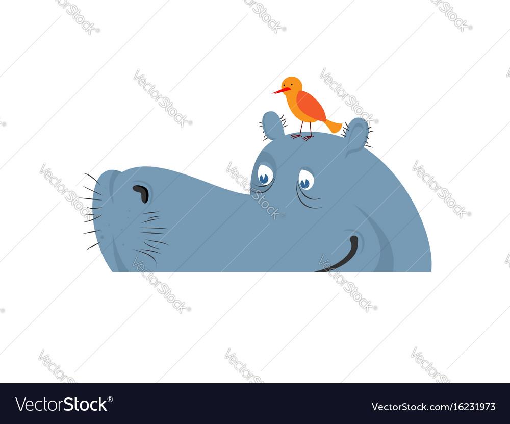 Hippo in water hippopotamus in river large animal
