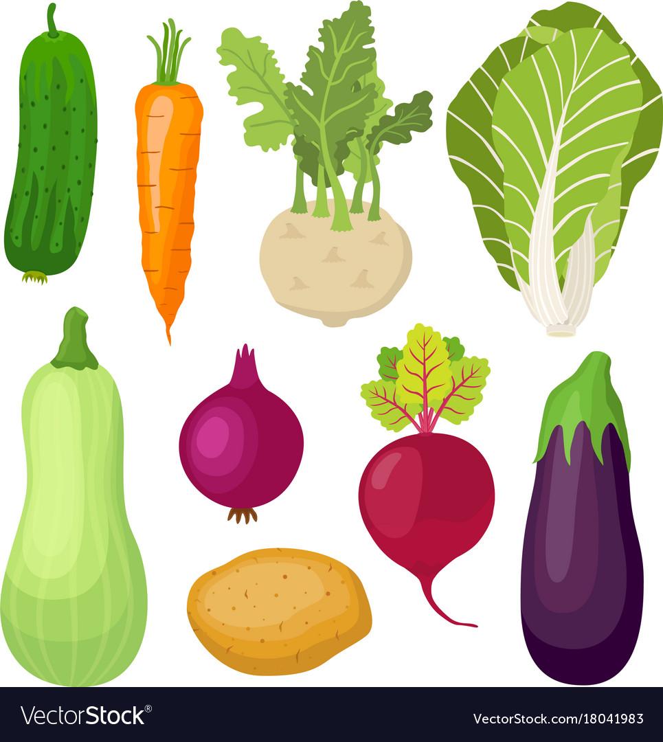 Garden vegetable set cartoon flat style vector image