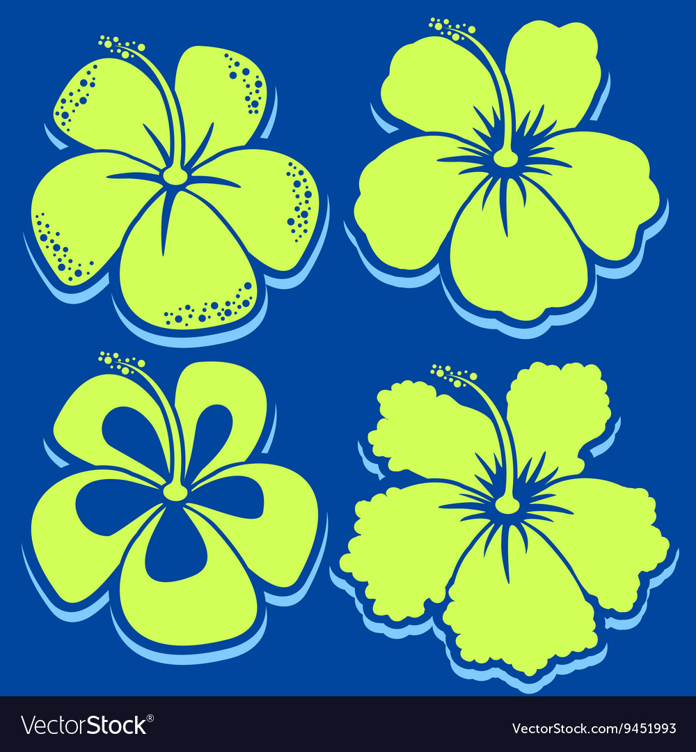 Flower Hibiscus Collection vector image