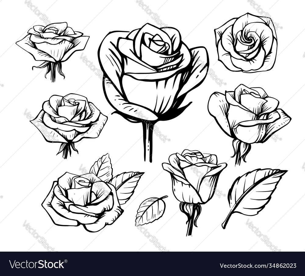 Black outline rose set on white background