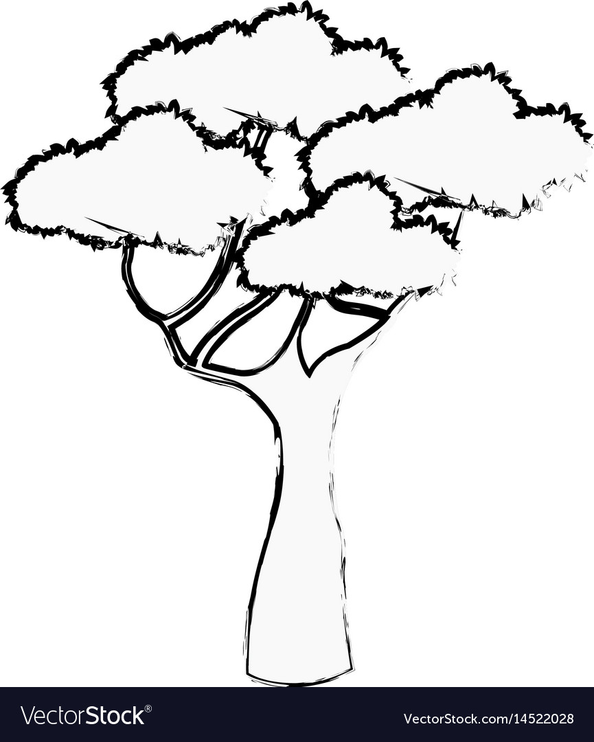 African tree foliage high forest sketch