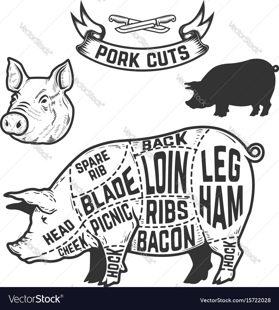 pork cuts butcher diagram design element for vector image rh vectorstock com pig butcher diagram poster pig meat diagram bacon