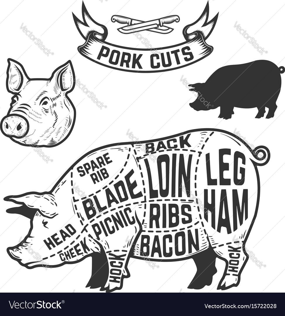 Pork cuts butcher diagram design element Vector ImageVectorStock