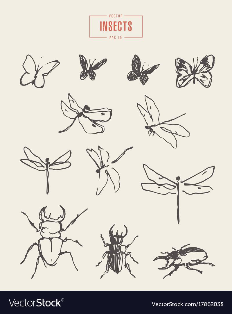 Set dragonflies butterflies drawn sketch