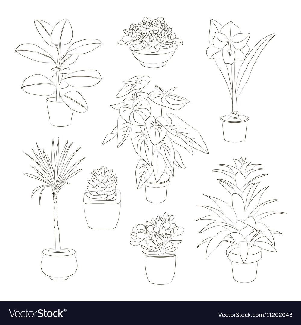 House plants set vector image