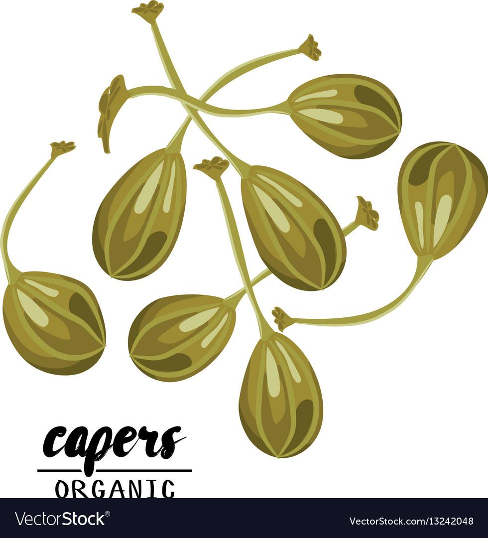 Cartoon capers ripe green vegetable vegetarian