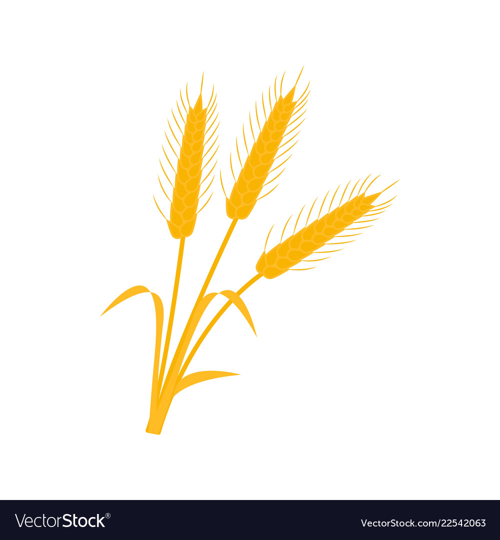 Wheat ear icons of the nature earns