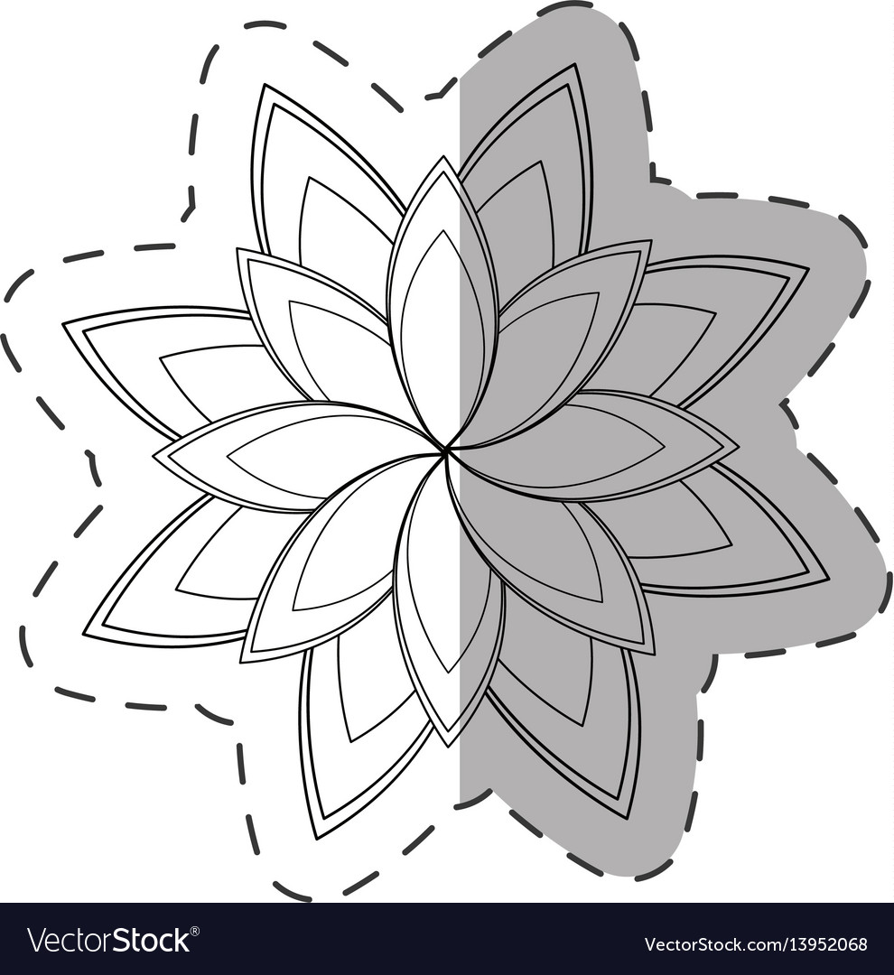 Star anice flower decoration monochrome vector image