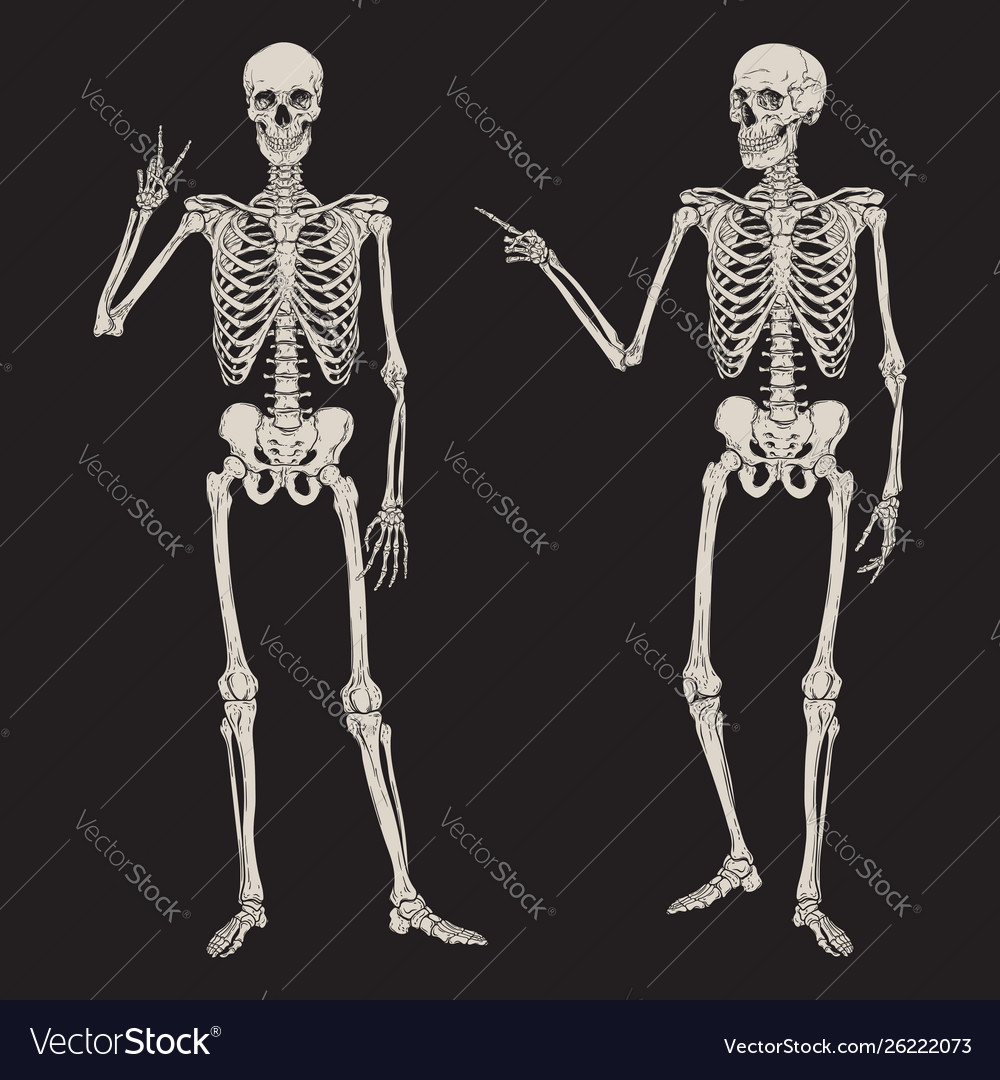 Human skeletons posing isolated over black