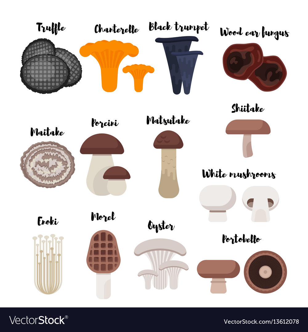 Flat style set of mushrooms vector image