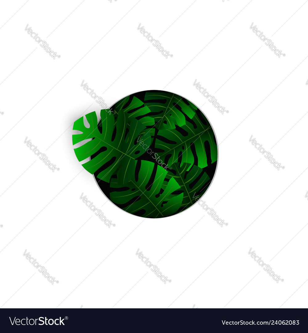 Realistic tropical green monstera leaves plant