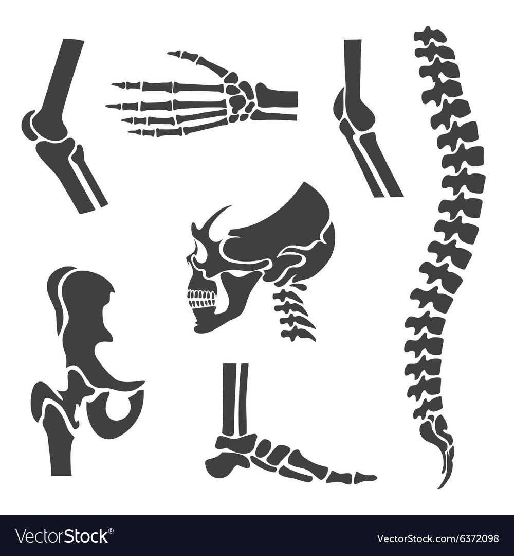 Human joints set Orthopedic and spine