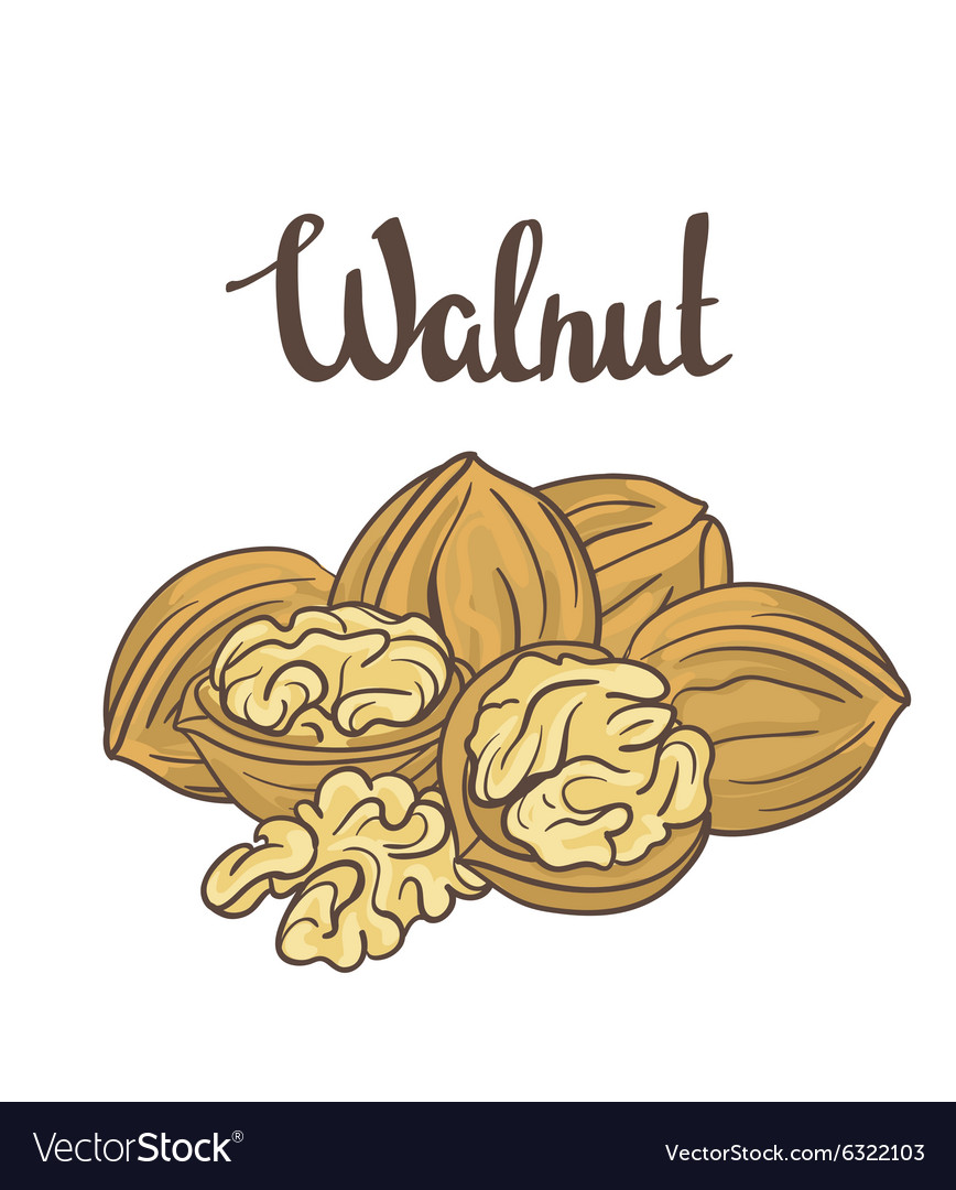 Walnuts isolated on white background Cartoon label