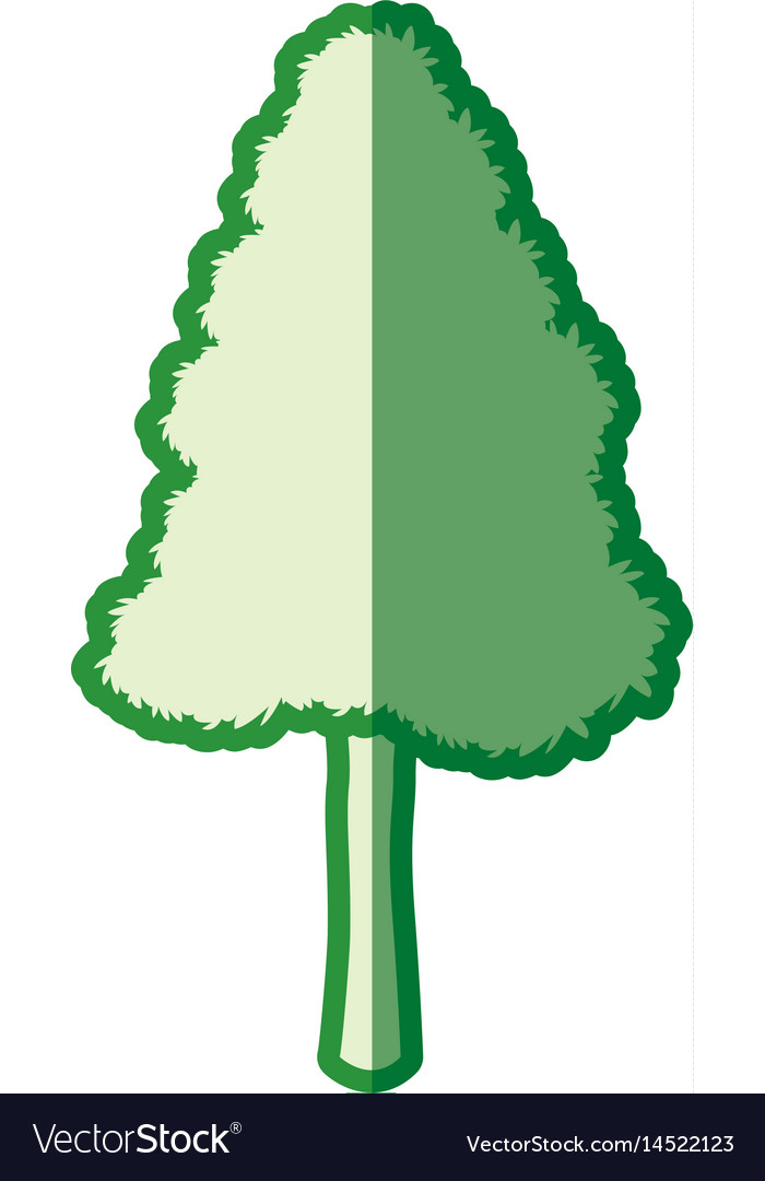 Green tree pine natural forest silhouette vector image