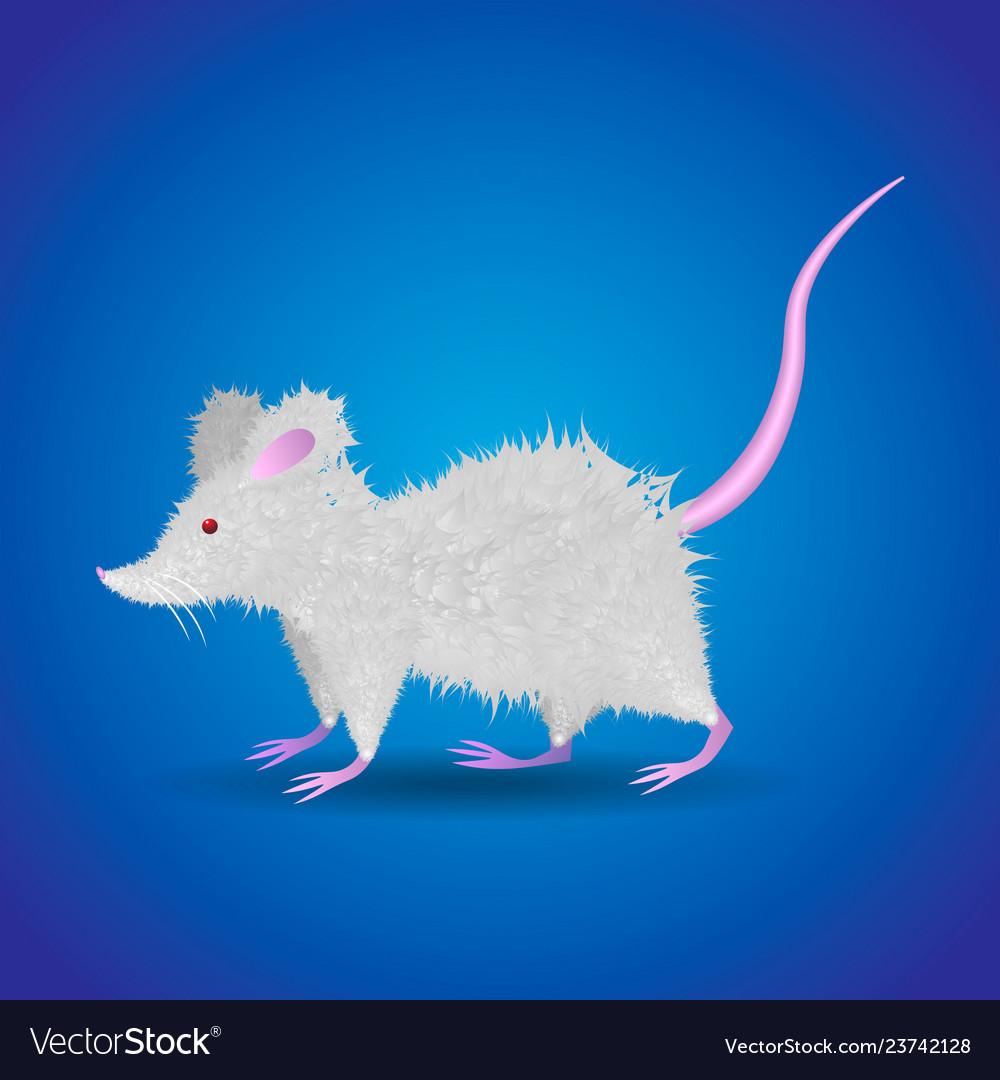 Cute funny cartoon fluffy white rat