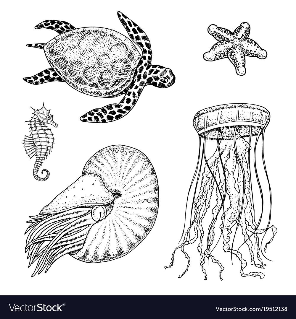 Sea creature cheloniidae or green turtle and