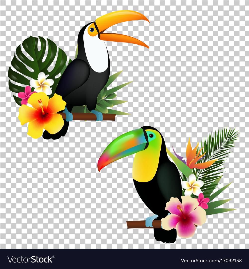 Toucan collection