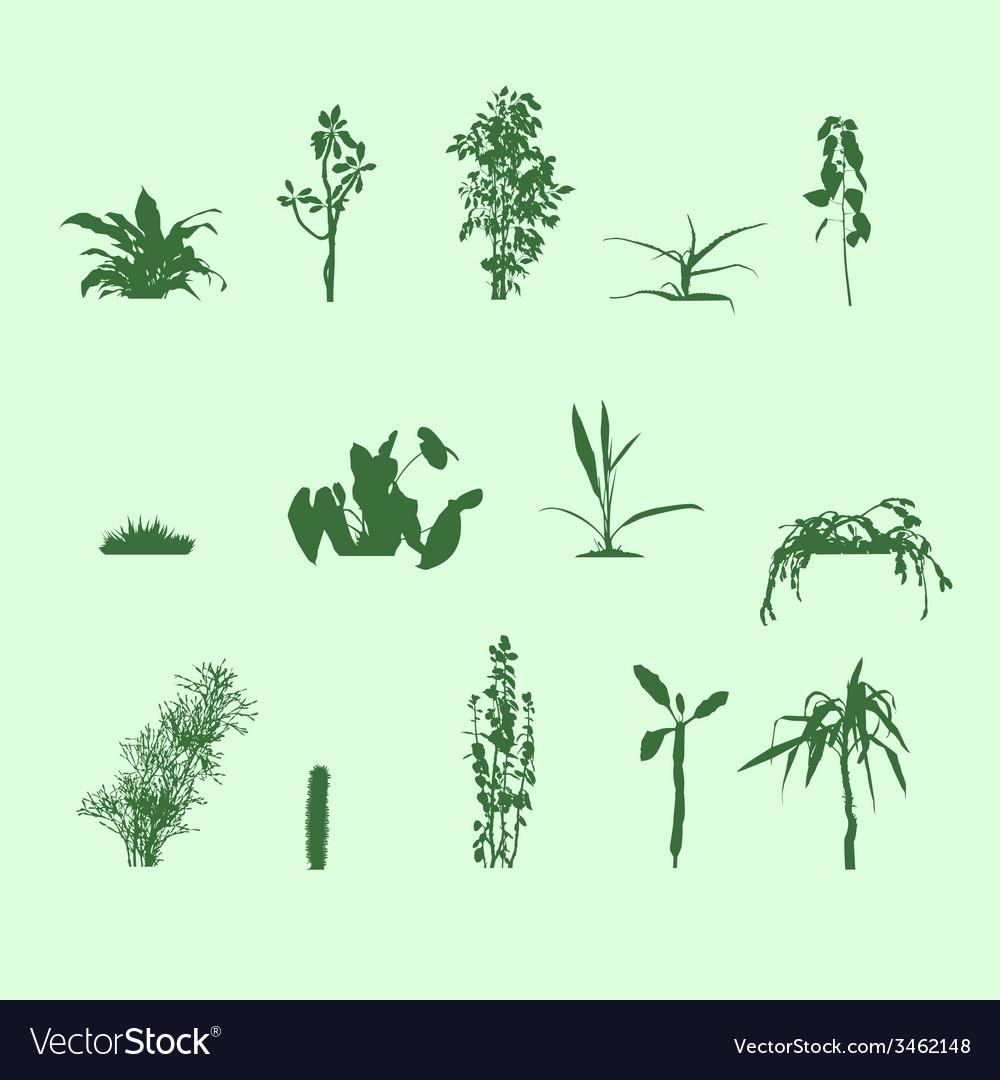 Silhouettes plants