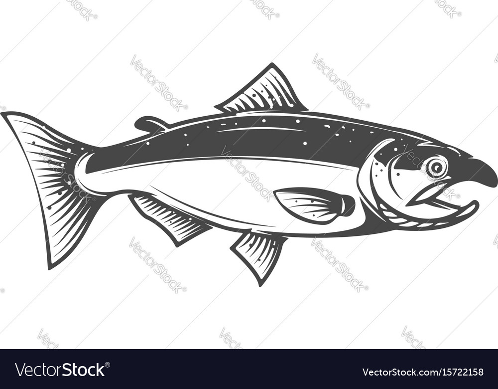 salmon icon isolated on white background seafood vector image vectorstock
