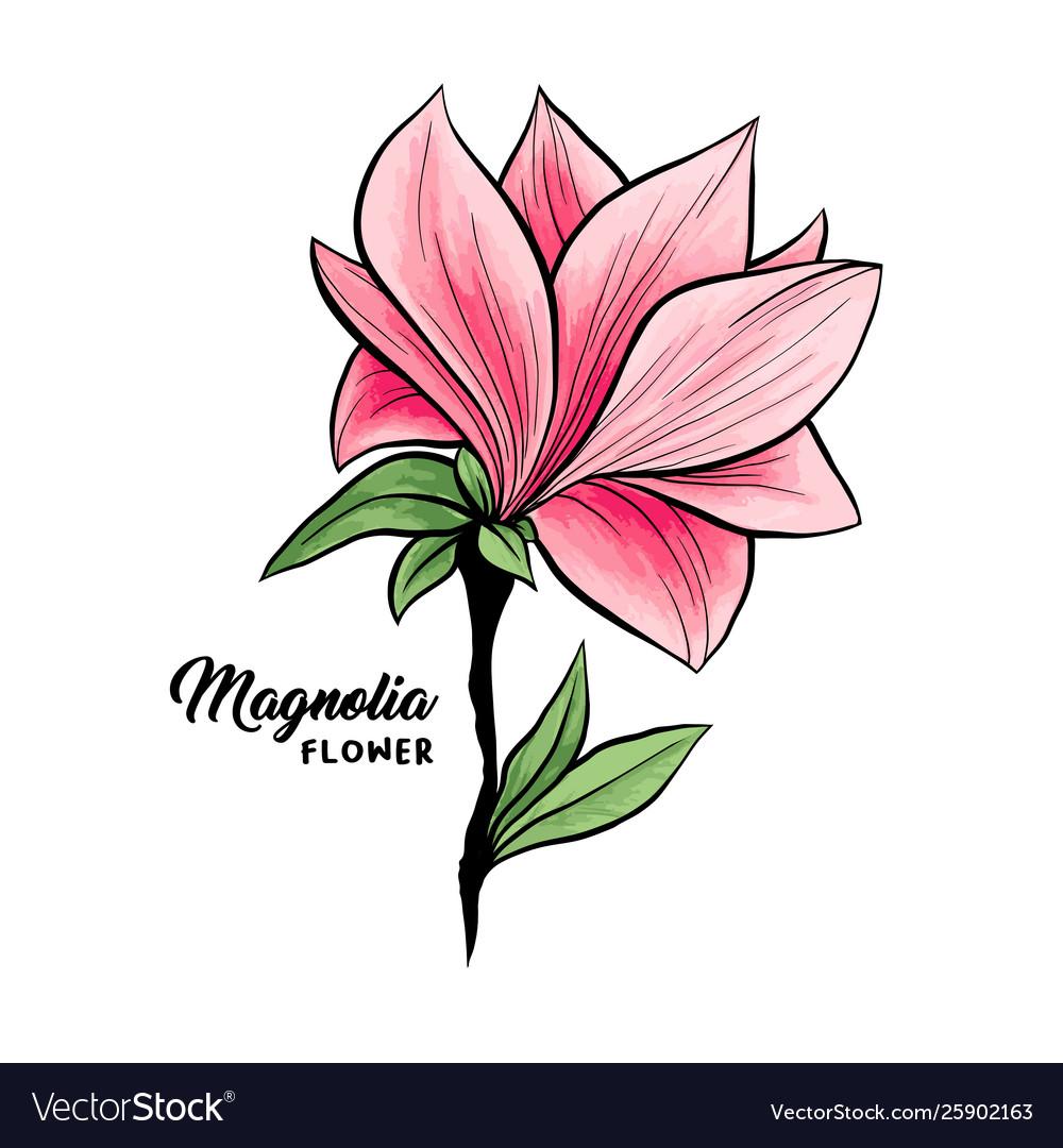 Magnolia flowers hand drawn