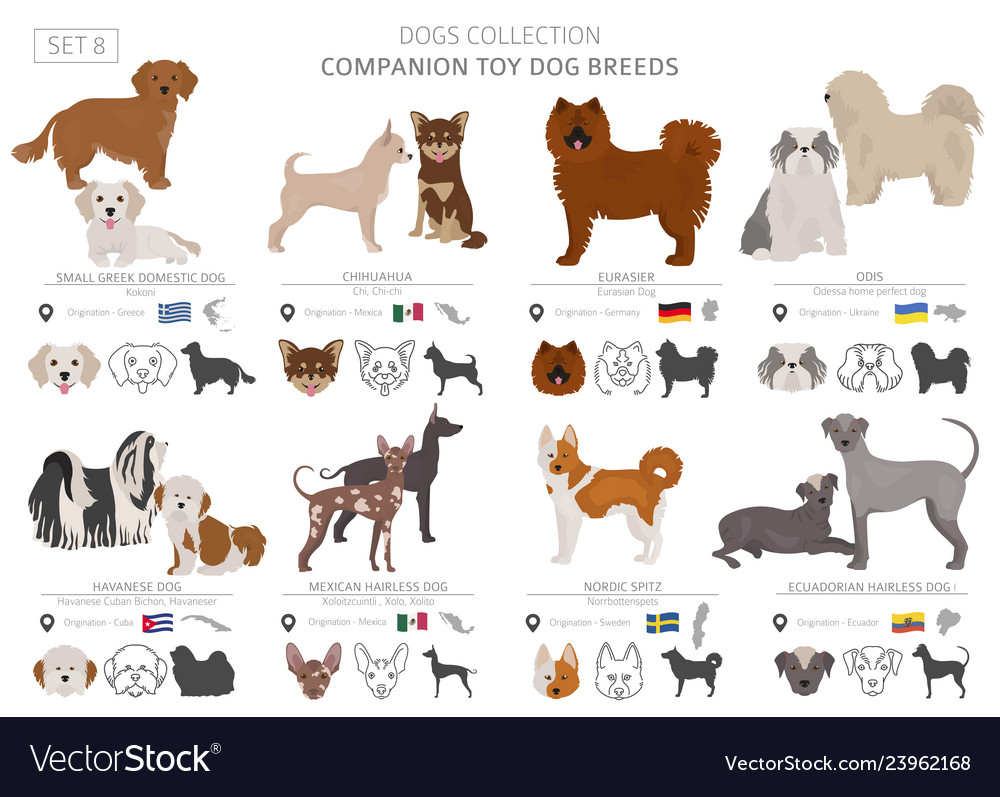 Companion and miniature toy dogs collection