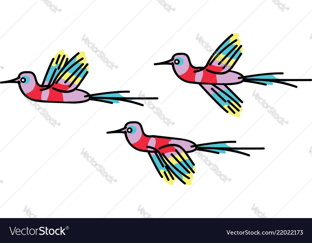 Hummingbird colibri