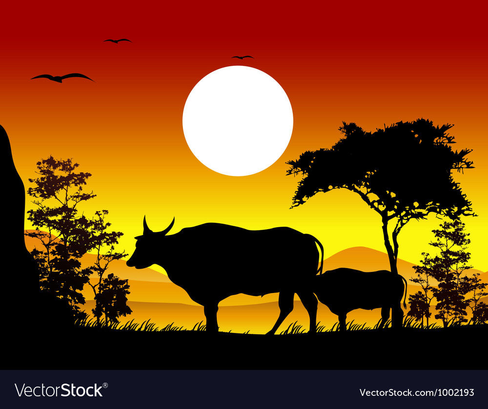 Cow silhouettes with landscape background