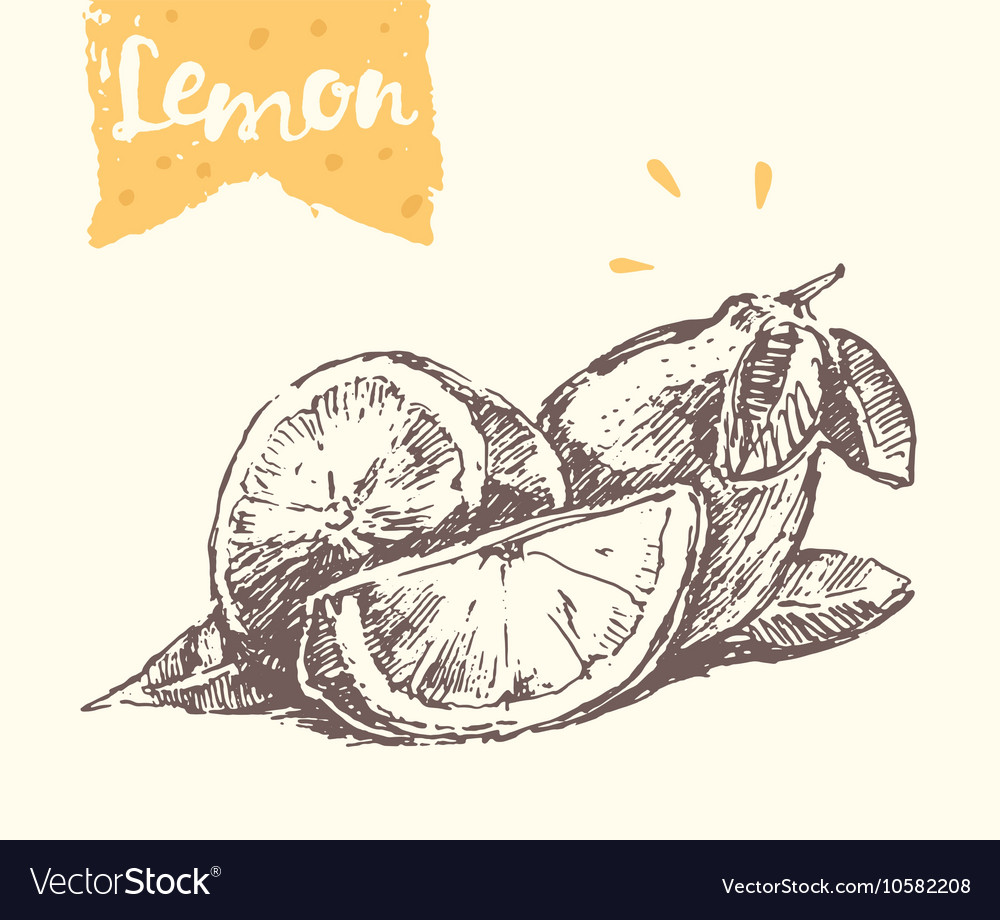 Hand drawn lemon sketch