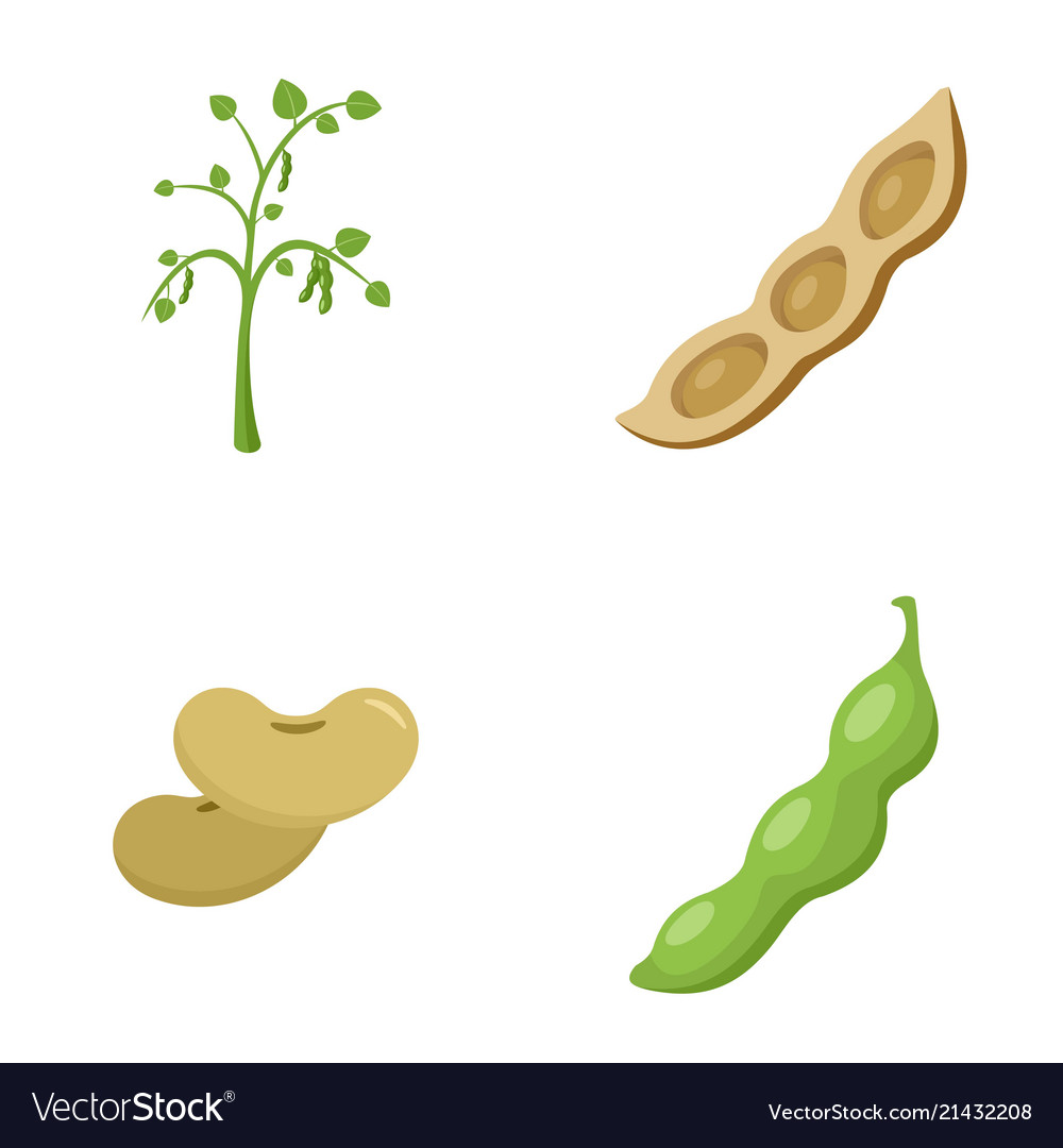 Soybean soy beans seed icons set flat style