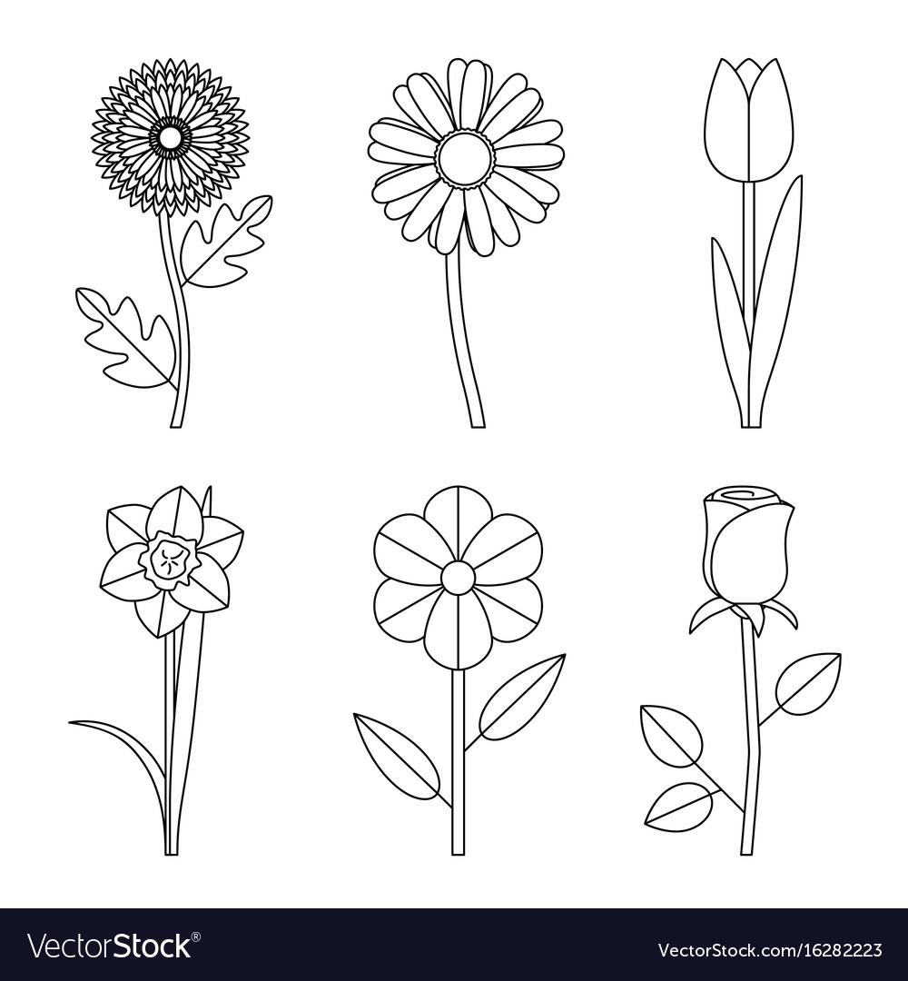Flower Line Art Images: Flowers Line Drawings Royalty Free Vector Image