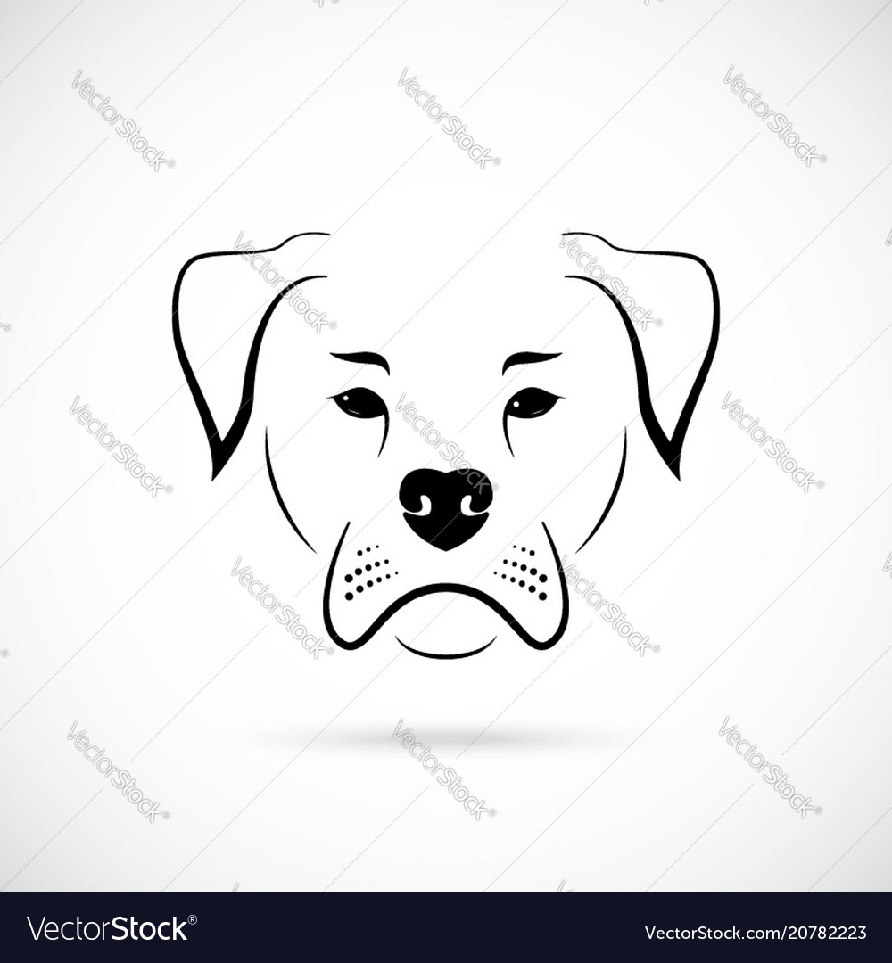 Muzzle american bulldog on white background dog